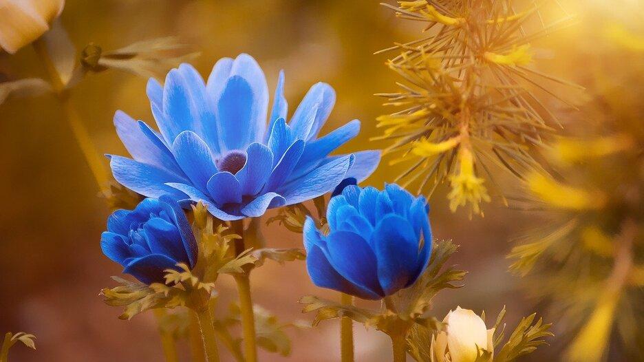 anemone-2396299_1280
